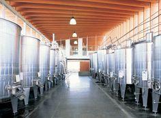 FERMENTATION ROOM.  Ventolera Winery - Chile [F. Izquierdo]