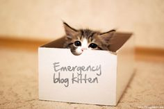Emergency Blog Kitten.