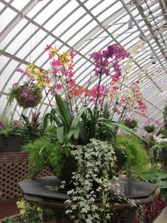 container gardening ideas pictures | Container Gardening Ideas | Gardening: Container Gardens