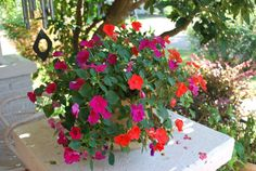 The occasional rains and breaks in the heat encourage us all to spend some of our summer outdoors, and nothing makes the yard, patio or porch more inviting than flowers.