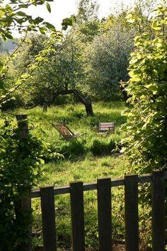 The charm of a wild garden