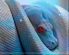Big time creepy snake