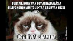 Funny Cats, Funny Animals, Funny Jokes, Grumpy Cats, Cats Bus, Cats And Kittens, Cat Brain, Cat Costumes, Cat Memes