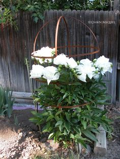 Peony Plant Supports Solid Strong And Hand Crafted In
