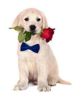Cute Dogs (7)