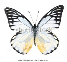 White and black butterfly on isolated white background by ArtisticPhoto, via Shutterstock