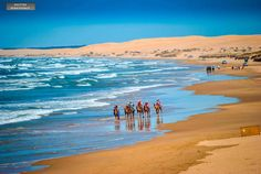 Australia # coastal ~ Camel riding at Port Stephens, NSW ~ Shutter Renaissance