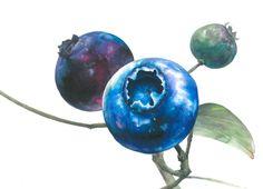 이번 기초디자인 개체 정물은 눈에 좋은 블루베리 열매를 그려 보았습니다^^먹음직 스럽게...