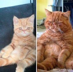 """Прелестные фотографии кошек """"тогда и сейчас"""", которые растопят ваше сердце (27 фото)"""