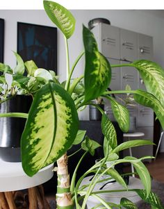 Urban Jungle Bloggers Tropicool by @X1114
