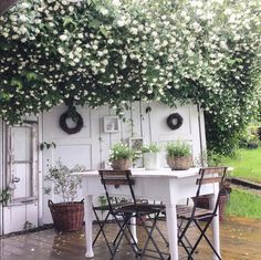 moon garden + outside dining Outdoor Rooms, Outdoor Gardens, Outdoor Living, Outdoor Decor, Rustic Outdoor, Moon Garden, Dream Garden, Jardin Style Shabby Chic, Romantic Backyard