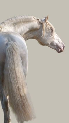 SABON HOME, gorgeous colored horse. Surreal photography. Please also visit www.JustForYouPropheticArt.com for colorful inspirational Art. Thank you so much! Blessings!