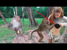 Top Funny Monkeys Meeting - Monkeys Mating With Family Group - Funny Monkey 2017