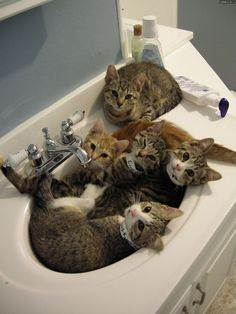 Sinkful of Kitties! Do you think they are all trying to get a drink? #kittens #cutekittens