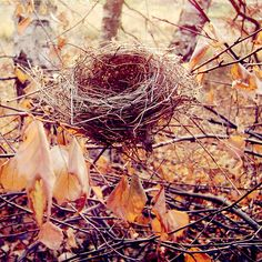 Love to decorate with bird nests ~ only pick up those that have fallen to the ground.  A nest in a Christmas tree is good luck!