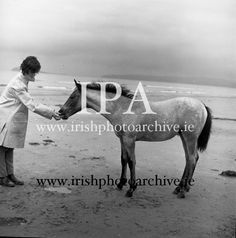Connemara Pony 'Ocean Breeze' with her 4 month old foal at Portmarnock Strand and Connemara Pony, 4 Month Olds, Photo Archive, Breeze, Ireland, Irish, Ocean, Gallery, Image