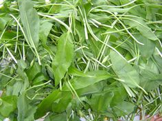 Jak vařit z medvědího česneku | recepty Korn, Spinach, Herbs, Stuffed Peppers, Gardening, Vegetables, Plants, Stuffed Pepper, Garten