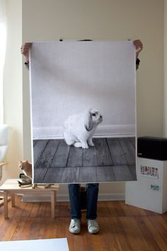 i love this poster of the bunny named, Cakes. ;)