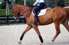 Hoof prints in my Heart Horse Girl, Horse Love, Pretty Horses, Beautiful Horses, Hunter Horse, Horse Braiding, Horse Magazine, English Riding, Equestrian Outfits