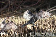 Aves de Unare, Edo Anzoátegui #Paisajes #Venezuela #Rincones Reportero Gráfico - José Rodríguez