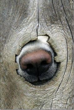 dogs noses through a tree..the noses knows there is something out there