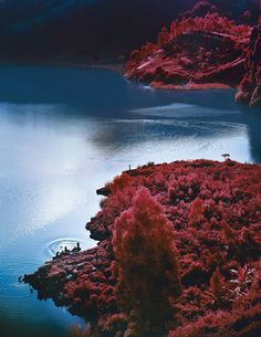 Richard Mosse, Lac Vert, 2012, from The Enclave (Aperture, 2013). Courtesy of the artist and Jack Shainman Gallery.