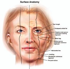 Facial skin anatomy