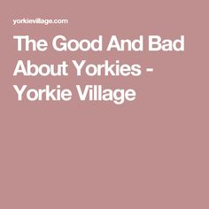 The Good And Bad About Yorkies - Yorkie Village