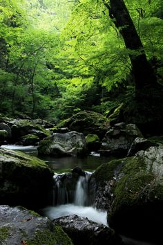 In the Depths of the Forest by Ken Shimo. This valley was found along the the way to the Setonotaki Waterfalls located in Hiroshima, Japan.