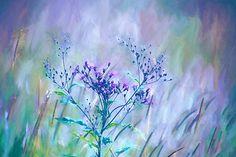Purple Meadow Grass - Fine Art Photo by Sharon McConnell