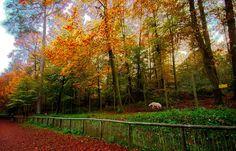 So ein Wolf ist ja auch nur ein Mensch. ... Und freut sich über Sonnenschein im Herbstblätterwald. Und über den ein oder anderen Besucher im Merziger Kammerforst. :-)