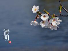 清明 « Qing Ming » le 4 avril- le 6 avril Clear and bright/ La limpidité et la clarté
