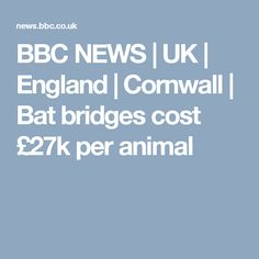 Bridges to help bats keep to their flight paths over a bypass in Cornwall cost more than per winged user, the Highways Agency admits. Environmental Ethics, Uk News, Cornwall, Bridges, Bbc, England, Animal, Animals, English
