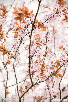 Fall Wallpaper, Trendy Wallpaper, Pastel Wallpaper, Flower Wallpaper, Brick Wall Background, Yellow Background, Flowers Nature, Beautiful Flowers, Screensaver Pictures