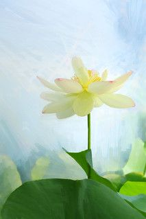 Lotus Flower Paintings / Photographic images using Akvis O… | Flickr Flower Painting Images, Flower Paintings, Paint Filter, Plant Leaves, Lotus Flowers, Plants, Photography, Amazing, Paintings Of Flowers
