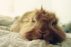 sleepy bunny..