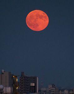 月が最も大きく見える「スーパームーン」が28日夕、東の空に姿を現した。1年のうちで月が地球に最も近づくタイミングと満月のタイミングが一致するため、普段より大きく、明るく見える=東京都台東区、2015年9月28日撮影
