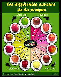 Les differentes saveurs de la pomme. ~ Général Kulture!