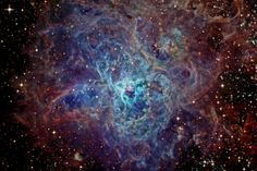 First cataloged as a star, 30 Doradus is actually an immense star forming region in nearby galaxy The Large Magellanic Cloud. The region's spidery appearance is responsible for its popular name, the Tarantula nebula, except that this tarantula is about 1,000 light-years across, and 180,000 light-years away in the southern constellation Dorado. If the Tarantula nebula were at the distance of the Orion Nebula (1,500 light-years), the nearest stellar nursery to Earth, it would appear to cover…