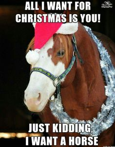 That is so true - Horses Funny - Funny Horse Meme - - That is so true The post That is so true appeared first on Gag Dad. Funny Horse Memes, Funny Horse Pictures, Funny Horses, Funny Animal Jokes, Cute Horses, Pretty Horses, Horse Love, Cute Funny Animals, Beautiful Horses