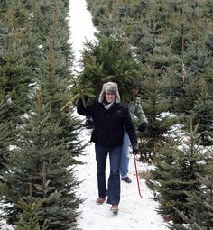 The American Christmas Tree Association says that 83 percent of American households who display a Christmas tree will display an artificial tree this season. That said, an estimated 22 million real Christmas trees will be sold this year.