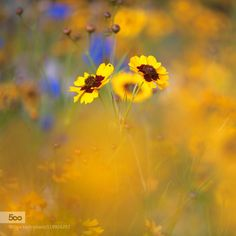 Late Summer by PennyMyles #nature