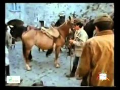 un #documentario del 1978 sulla #maremma. tra riforma agraria, passato e un futuro ormai sorpassato.