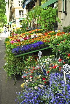 Colorful flower stand on a sidewalk in Paris. Photography by Elena Elisseeva.  fineartamerica.com