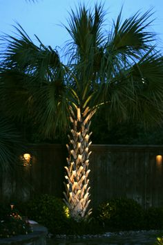 palm trees lit up for the holidays hallandale beach beach life