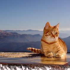 Tomcat Climber on Icy Desk (elevation: 2067 meters above sea level)