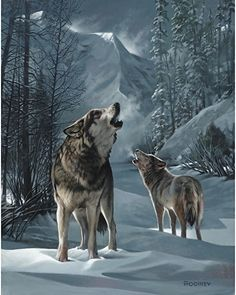 sound-of-the-wild / El aullido del lobo. Wildlife Paintings, Wildlife Art, Animal Paintings, Animal Drawings, Wolf Images, Wolf Photos, Wolf Pictures, Beautiful Wolves, Animals Beautiful
