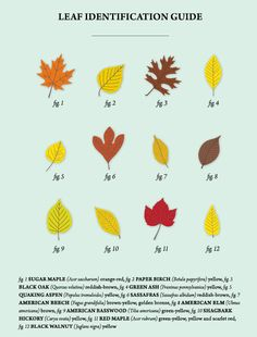 Fall foliage: the science behind fall's changing leaf colours | Homes | Green Living