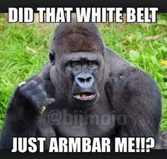 Funny Bjj and martial arts humor