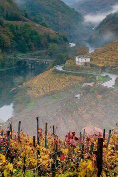 Ribeira Sacra (Galicia)   Desde Monforte nos adentramos en la Ribeira Sacra por tierras de Sober, donde se encuentra la mayor extensión de cultivo de vid de uva de Amandi, con una panorámica excepcional de la garganta fluvial en donde impresiona  la frondosidad de los bosques y los viñedos, que en terrazas de piedra cubren las laderas casi verticales.